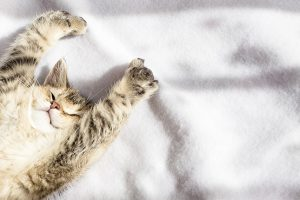 5-reasons-cats-are-the-financially-savvy-choice-of-pet