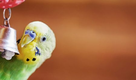 Budgie-ting for your new fur baby: our new module really is the cat's meow!